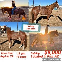 horseforsale.jpg